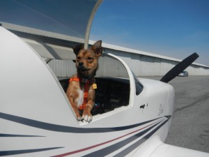 Flying with Pets